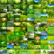 Nature wallpaper - Stock Photo