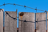 Wooden fence of barbed wire — Stock Photo
