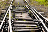 Grass between on the railway — Stock Photo