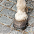 Foot and hoof white horse — Stock Photo