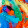Stock Photo: Background of colored feathers of birds.