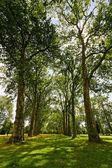 árvores altas — Fotografia Stock