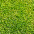 Stock Photo: Grass green