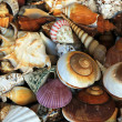 Stock Photo: Shells
