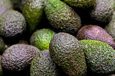Avocat — Photo