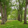 Trees in line - Stock Photo