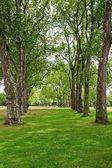 Árvores em linha — Fotografia Stock