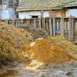 Livestock manure — Stock Photo