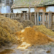 Livestock manure — Stock Photo #5660263