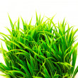 Grass bush — Stock Photo #5837952