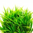 Grass bush - Stock Photo