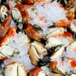 Fresh crabs — Foto de Stock