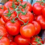 Tomatoes — Stock Photo #5914015