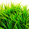 Green grass — Stock Photo #6014228