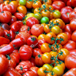 Stock Photo: Organic tomatoes