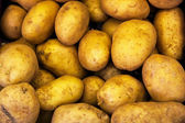 Potatoes — Stock Photo