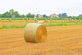 Rolling haystack — Stock Photo