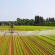 Irrigation field panorama — Stock Photo