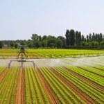 Irrigation field panorama — Stock Photo