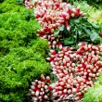 Fresh salads — Stock Photo