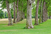 Trees in row — Foto Stock