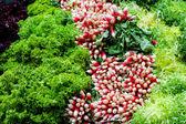 Ensaladas frescas — Foto de Stock