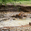 Stock Photo: Debris flow