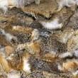 rabbit fur — Stock Photo