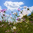 Flowers on blue sky background — Stock fotografie