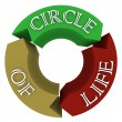 Circle of Life Arrows in Circular Cycle Showing Connections — 图库照片