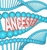 Ancestry Word in DNA Research Your Genealogy Ancestors — Stock Photo