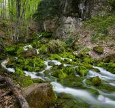Green stream — Stock Photo