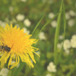 Stock Photo: Bee on yellow flower