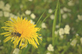 Bee on a yellow flower — Stock Photo