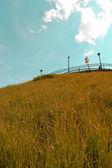Nature Landscape — Stockfoto