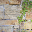Sandstone wall and vine — Stockfoto