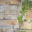 Sandstone wall and vine — Foto Stock