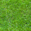 Stock Photo: Football Stadium Grass