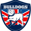 Stock Photo: English bulldog british rugby sports team mascot
