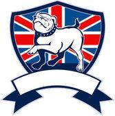 Proud english bulldog british flag shield — Stock Photo