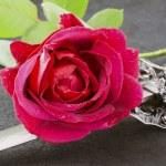 Rose and katana — Stock Photo