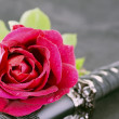 Rose and katana - Stock Photo