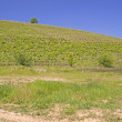 Vineyard — Stock Photo #5650808