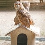 Owls — Stock Photo