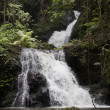 Постер, плакат: Waterfall cascading down through rain forest hawaii