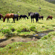 Stock Photo: Horses at meadow near stream,Caucasus mountain
