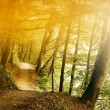 Sunlight in forest — Stock Photo