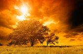 Arbre solitaire contre un ciel bleu au coucher du soleil. — Photo