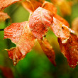 Colorful leaves with waterdrops — Stock Photo