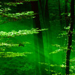 Stockfoto: Lights of the forest